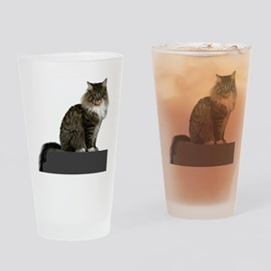 maine coon sitting tabby white Drinking Glass