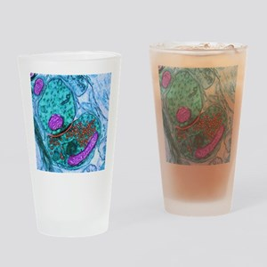 Synapse nerve junction, TEM Drinking Glass
