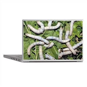 Silkworms on mulberry leaves - Laptop Skins