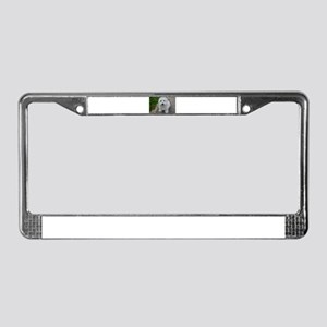 coton de tulear on bench License Plate Frame