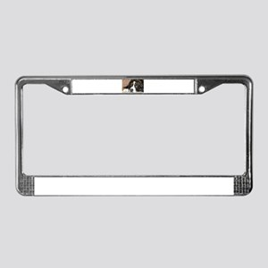 bernese mountain dog laying License Plate Frame