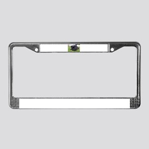 pug black laying License Plate Frame
