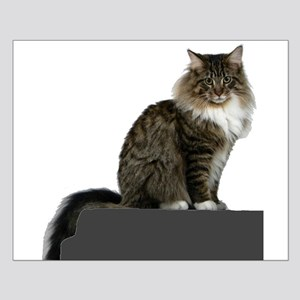 maine coon sitting tabby white Posters