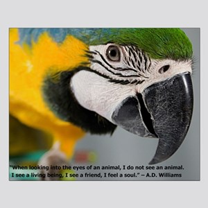 B&G Macaw with Quote Posters