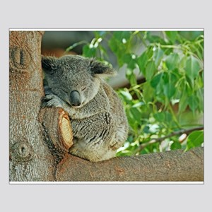 Sleeping Koala Small Poster