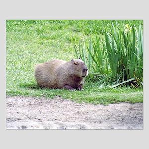 Capybara Laying Down Small Poster
