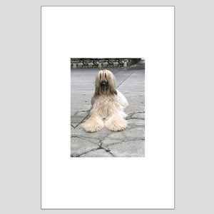 Helaine's Afghan Hound Large Poster
