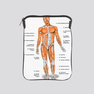 Muscles anatomy body iPad Sleeve