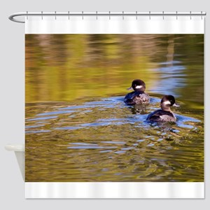 Bufflehead swimming Shower Curtain
