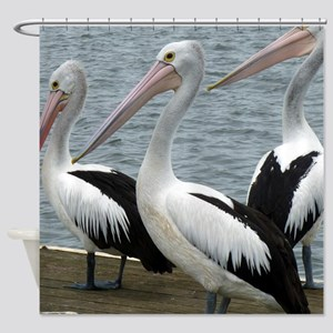 Three Gorgeous Pelicans Shower Curtain