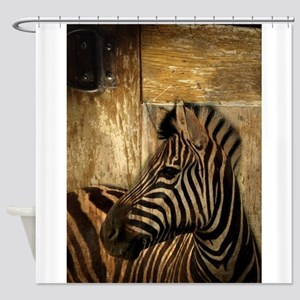 wild zebra safari Shower Curtain