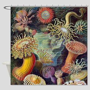 Vintage sea anemones illustration Shower Curtain