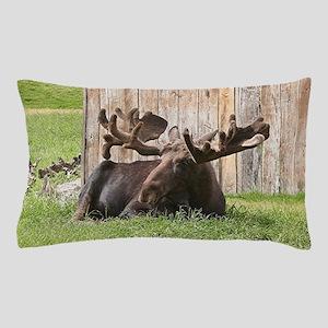 Sitting moose, Alaska, USA Pillow Case