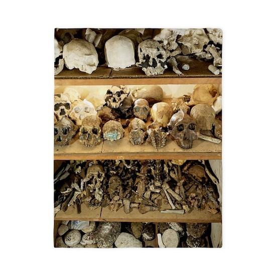 Hominid skull casts