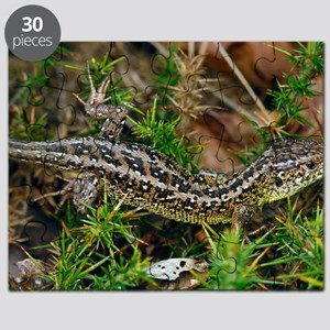 Male sand lizard Puzzle