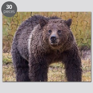 Yellowstone Grizzly Puzzle