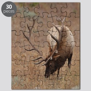 Number 10  mspd Puzzle