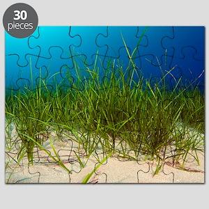 Little Neptune grass (Cymodocea nodosa) Puzzle