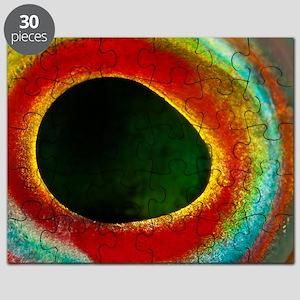 Axillary wrasse eye Puzzle