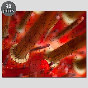 Sea urchin detail Puzzle