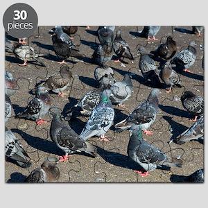 Rock pigeons Puzzle