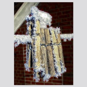 Iced Clothespins 5x7 Flat Cards
