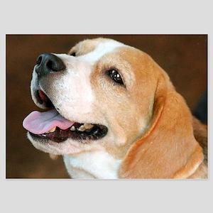 Beagle Dog Invitations