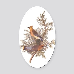 Cedar Waxwing Birds Oval Car Magnet