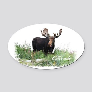Colorado Moose Oval Car Magnet