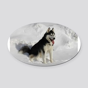 siberian husky sitting Oval Car Magnet