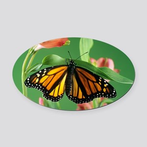 Monarch butterfly - Oval Car Magnet