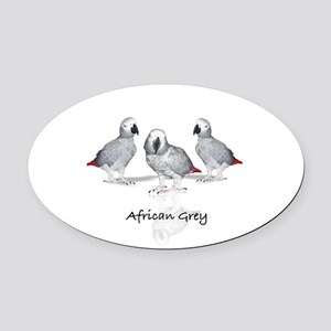 african grey parrot Oval Car Magnet
