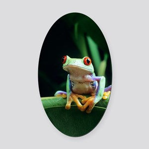 Red-eyed tree frog Oval Car Magnet