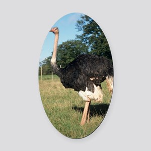 Ostrich Oval Car Magnet