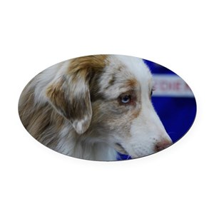Australian Shepherd Dog Oval Car Magnet