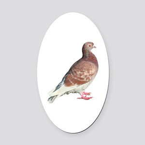 Red Pigeon (Isolated) Oval Car Magnet