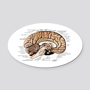 Human Brain Oval Car Magnet