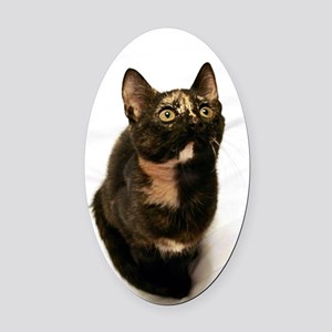 Tortie Oval Car Magnet