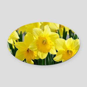 Trumpet Daffodil Oval Car Magnet
