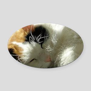 Sleeping Kitty Oval Car Magnet