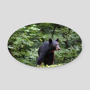 Smoky Mountain Black Bear Oval Car Magnet
