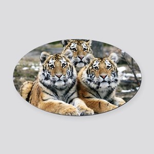 TIGERS Oval Car Magnet