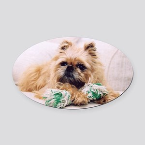 Brussels Griffon Oval Car Magnet