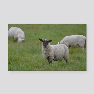 Herd of Sheep Rectangle Car Magnet