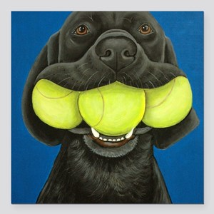 "Black Lab with 3 tennis  Square Car Magnet 3"" x 3"""