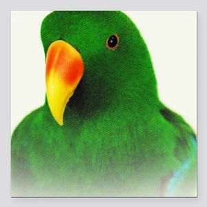 "Male Eclectus Square Car Magnet 3"" x 3"""