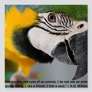 "B&G Macaw with Quote Square Car Magnet 3"" x 3"""