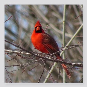 "Male Cardinal Square Car Magnet 3"" x 3"""