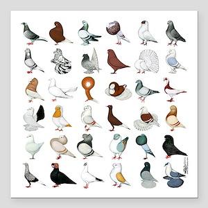 """36 Pigeon Breeds Square Car Magnet 3"""" X 3&quo"""