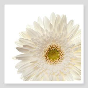 "White gerbera daisy isol Square Car Magnet 3"" x 3"""
